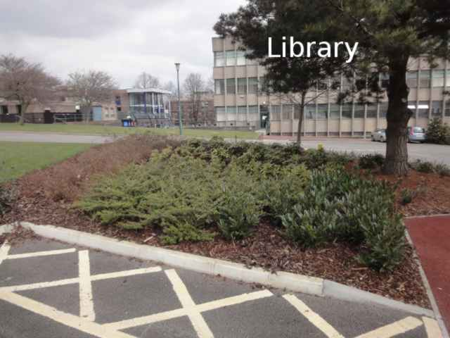 "Photo: In the foreground, criss-cross yellow hatchings on the ground indicate the edge of a disabled parking bay. Next to the parking bay is a flowerbed with bushes, and a tree. Beyond that is a road, and beyond the road is a building with vertical ridges. On the photo, the building is labelled ""Library""."